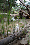 Lowcountry wooded tidal marsh grass