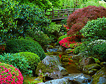 Portland, OR             <br /> Moon Bridge over flowing stream and flowering azaleas The Japanese Garden, Washington Park