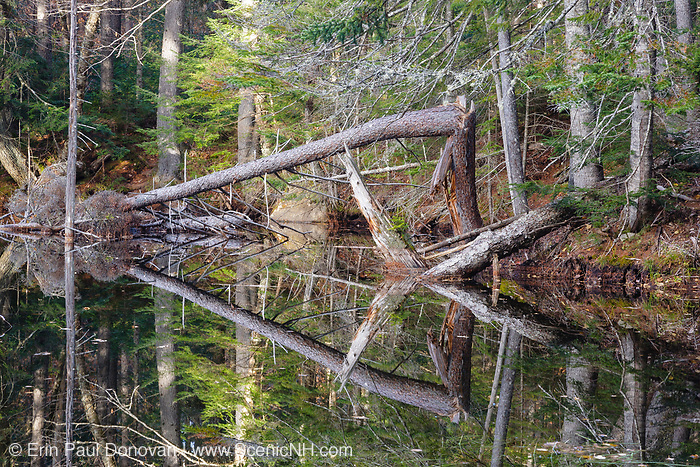 Swift River Railroad - Wetlands area along the Oliverian Brook Trail in the Albany, New Hampshire USA. This was a logging railroad in operation from 1906 - 1916.