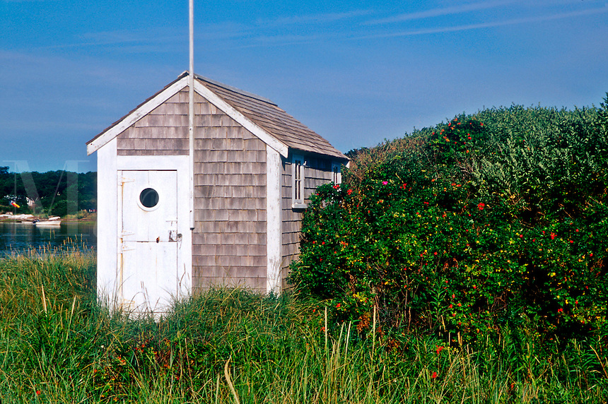 Beach shack and rosehips along Chatham harbor, Cape Cod