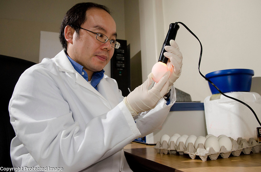 Dr. Henry Wan observing embryonic chicken behavior by candling eggs.