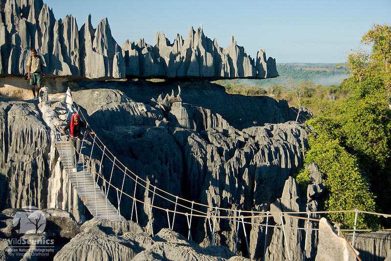 Tourist crossing the suspension bridge in Tsingy de Bemaraha National Park