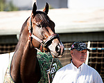 ARCADIA, CA: Breeders' Cup Dirt Mile entrant Omaha Beach, trained by Richard E. Mandella, outside his stall with trainer Richard Mandella for the Breeders' Cup World Championships at Santa Anita Park in Arcadia, California on October 30, 2019.