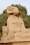 A ram-headed sphinx (a depiction of the god Amun-Ra) it is one of many in an avenue leading to the first pylon at Karnak. Karnak is part of the ancient city of Thebes ( built in and around modern day Luxor).The building of the Temple complex at Karnak began in the reign of the Pharaoh Senusret I who ruled Egypt from 1971 -1926 BC. Approximately 30 Pharaohs contributed to the building of the complex and in so doing made it the largest ancient religious site in the world. The ancient name for Karnak is Ipet-isut (Most select of places).