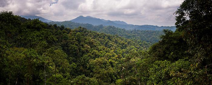 Choco Rainforest, Ecuador. This area of jungle is the Mashpi Cloud Forest in the Pichincha Province of Ecuador, South America
