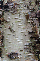 Bark Detail, Castine, Maine, US