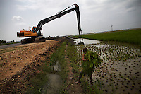 Rice is harvested from a field before a digger removes the earth to build a dike as floodwater threathens the town of Mehar, in Sindh province, Pakistan.