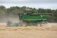 18.7.2020 Harvesting Winter barley in South Lincolnshire. <br />  ©Tim Scrivener Photographer 07850 303986<br />      ....Covering Agriculture In The UK.