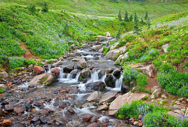 Edith Creek flows down a wildflower lined valley along the Skyline Trail in Mount Rainier National Park, Washington, USA