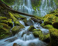A massive waterfall over vibrant green moss in the Cascades rainforest, Oregon.