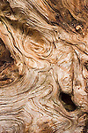 Knotty log close up background