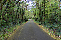 The road through Dromore Wood.