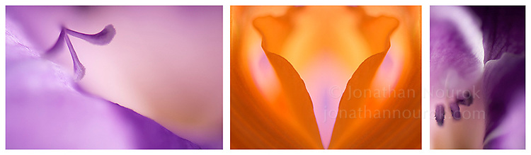 Close-up photographic triptych of gladiola flowers. Images 157, 158 and 159.