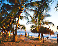 Nayarit, Mexico<br /> Sunset light on coconut palms (Cocos nucifera) and hammock on the beach of Bahia de Banderas (Banderas Bay) near the village of Bucerias