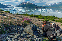 Summer Landscape man photographin ice bergs floating in Inner Lake George and wildflowers on shore with Colony Glacier in Background. <br /> Photo by Jeff Schultz/SchultzPhoto.com  (C) 2018  ALL RIGHTS RESERVED  Thurmer Tours July 2018