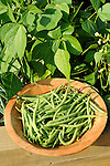 Fresh picked tendergreen beans.
