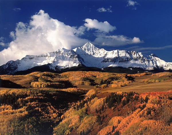Autumn aspen trees and Wilson Peak (14017 feet), San Miguel Range, San Juan Mountains, Telluride, Colorado,