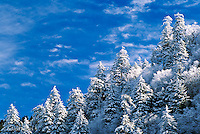 Winter view of evergreen trees draped with snow, Newfound Gap, Great Smoky Mountains National  Park, North Carolina.