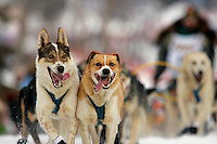 Lead dogs charge down the trail at the restart of the 2008 Iditarod in Willow