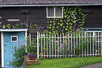 A vine grows up the weatherboarding from the small informal garden that flourishes behind the metal railings