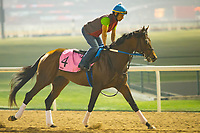 DUBAI,UNITED ARAB EMIRATES-MARCH 29: Reride,trained by Steve Asmussen,exercises in preparation for the UAE Derby at Meydan Racecourse on March 29,2018 in Dubai,United Arab Emirates (Photo by Kaz Ishida/Eclipse Sportswire/Getty Images)