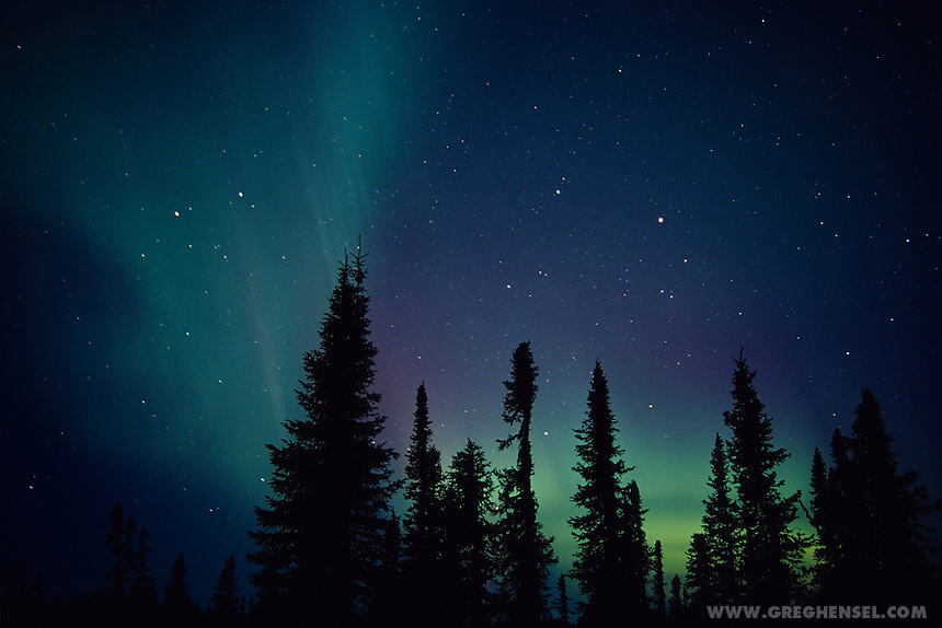 Aurora over spruce forest near Trapper Creek. Winter in Southcentral Alaska.