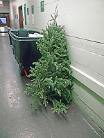 A poor, lonesome, discarded Christmas tree is seen in the trash area of an apartment building in New York on Friday, January 1, 2016. The Dept. of Sanitation Mulchfest is on January 9th and 10th this year where you can see you tree being ground up into mulch. (© Richard B. Levine)