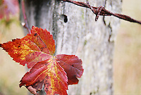Leaf and Fencepost Abstract