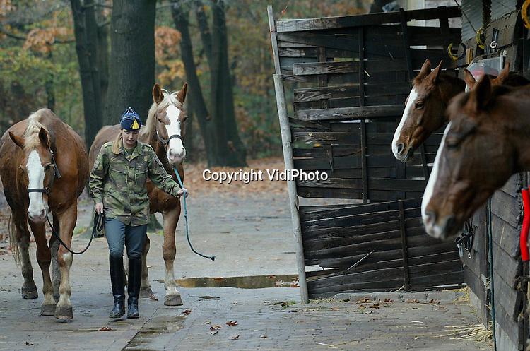 Foto: VidiPhoto..SCHAARSBERGEN - Paardenvolk van de zogenoemde Gele Rijders (11e afd. rijdende artillerie) verzorgt in Schaarsbergen de twaalf paarden van dit Defensie-onderdeel. De paarden worden vooral .ingezet voor ceremoniële taken, zoals ere-escorten, en .demonstraties. Volgende maand verhuist de groep naar een nieuwe moderne manege in 't Harde. Het aantal paarden wordt dan uitgebreid naar 20. Traditiegetrouw maken alle nieuwe Gele Rijders aan het begin van hun opleiding eerst kennis met de paarden.