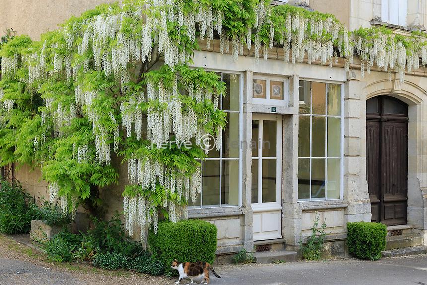 """France, Indre-et-Loire (37), Chédigny, village fleuri labellisé """"Village Jardin"""", maison et glycine blanche (Wisteria) // France, Indre et Loire, Chedigny, village in bloom labelled Village Jardin (Garden Village)"""