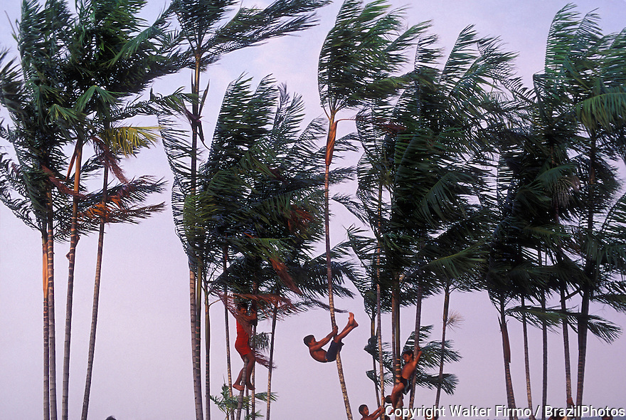 Praia do Mosqueiro ( Mosqueiro beach ), Belem city, Para State, Brazil. Dark-skinned children playing in the palm trees.