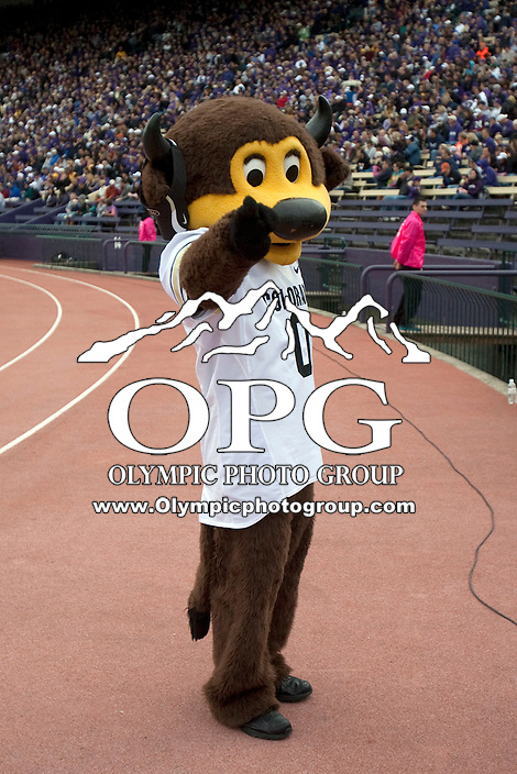 Oct 15, 2011:  Colorado mascot Chip entertained fans during the game.  Washington defeated Colorado 52-24 at Husky Stadium in Seattle, Washington...