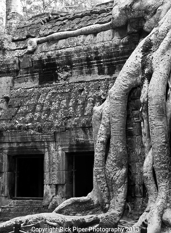 Ta Prohm Roots And Stone 05 - Silk-cotton tree roots on the NW side of Gopura III, Ta Prohm Temple, Angkor, Cambodia