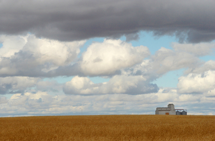 Storm clouds roll in above the Saskatchewan Wheat Pool elevator and a soon-to-be-harvested crop west of Moose Jaw. MARK TAYLOR/Moose Jaw Times-Herald