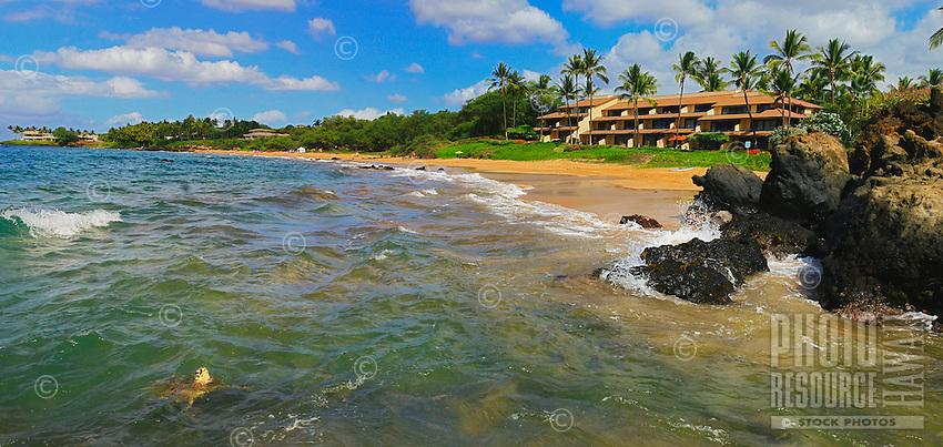 A sea turtle takes a peek in Makena, Maui, Hawaii.