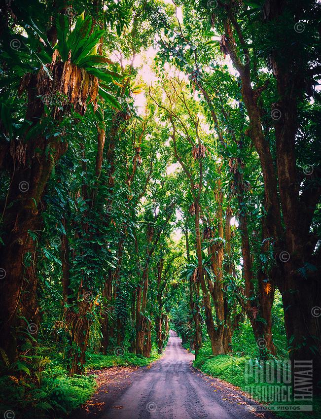 Scenic drive through a forest on Papaya Farms Road, Kapoho, Hawai'i Island.