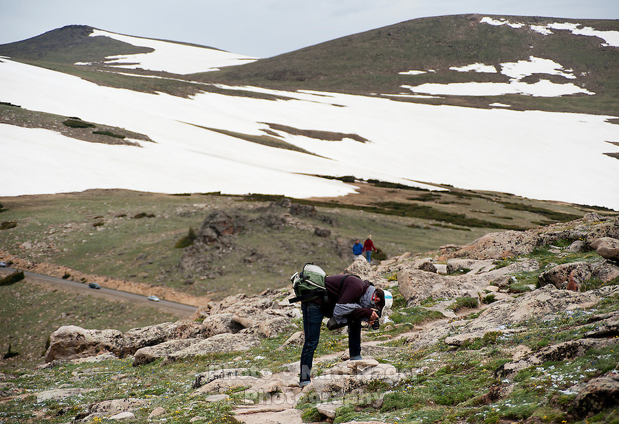 A hiker takes a photograph of wildflowers on The Ute Trail off Trail Ridge Road in Rocky Mountain National Park, in Colorado, Saturday, July 2, 2011. The elevation at the Ute Trail is 11466 feet...Photo by Matt Nager