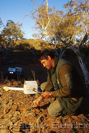Pest control officer from National Parks service laying 1080 poison bait against foxes. Mutawintji National Park, western NSW