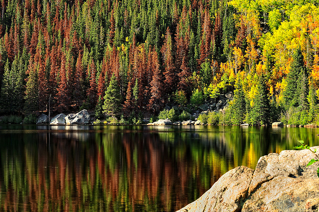 Bear Lake in Rocky Mountain National Park, Colorado, reflects fall colors