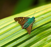 Costa Rica's lush vegetation is home to an estimated ten per cent of the all world's species of butterflies.