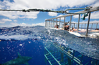 Tourists observing sharks from an underwater cage on a shark tour