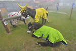 Appropiate jerseys for these donkeys during Stage 12 of the 104th edition of the Tour de France 2017, running 214.5km from Pau to Peyragudes, France. 13th July 2017.<br /> Picture: ASO/Bruno Bade | Cyclefile<br /> <br /> <br /> All photos usage must carry mandatory copyright credit (&copy; Cyclefile | ASO/Bruno Bade)