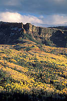 Yellow and gold leaves on aspen trees in fall on mountain slope in the San Juan Range, near Pagosa Springs, Colorado.