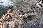 4. MAHANGO NATIONAL PARK, Namibia