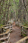 NAPLES FLORIDA - Corkscrew Swamp and Sanctuary was established to protect the largest remaining stand of ancient bald cypress in North America.