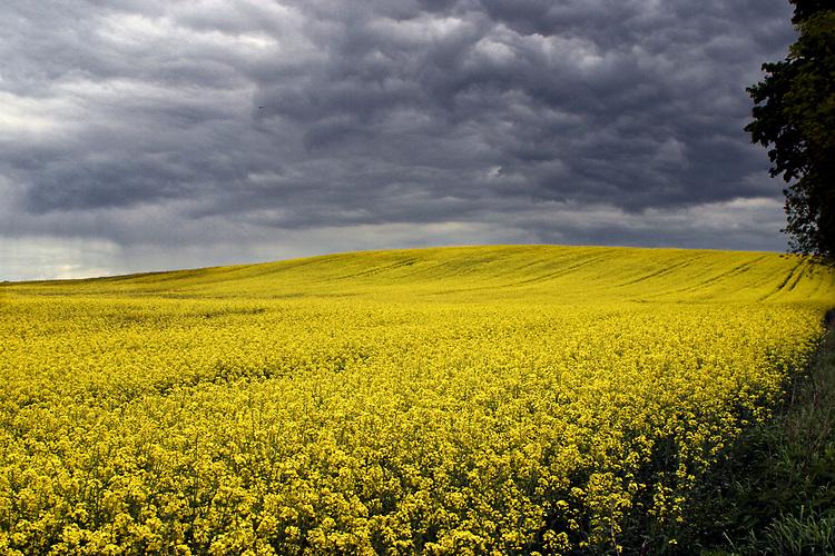 Mazurski krajobraz - okolice Węgorzewa