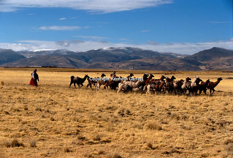 Llama salt caravan, Empires of the Sun; Bolivia; native peoples; Andes; Tiwanaku