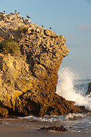 Waves crash into a wall of rock at the shoreline with a number of seagulls on top of it, seen from Corona Del Mar State Beach after having walked down to it from Inspiration Point.  Inspiration Point is just south/east of Corona Del Mar State Beach in Newport Beach, CA.