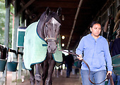 Unrivaled Belle, who would go on to win the Breeders' Cup Ladies, walks Bill Mott's shedrow.