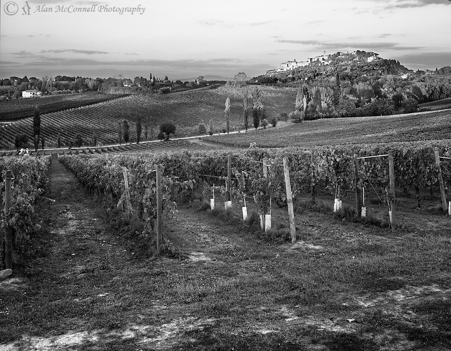 """Vineyards of Montepulciano""<br />